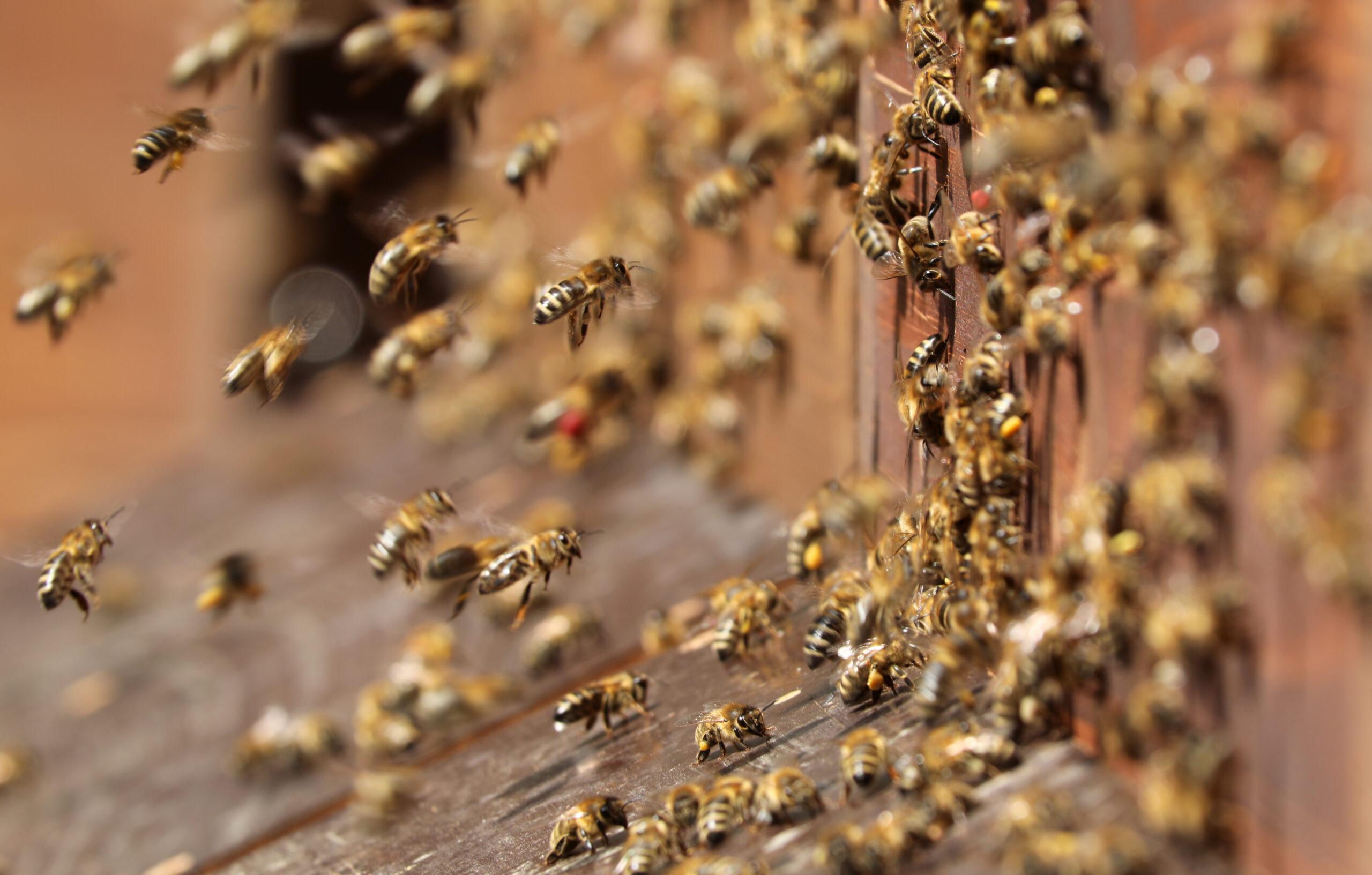 Das Bienenjahr (Kurzversion)