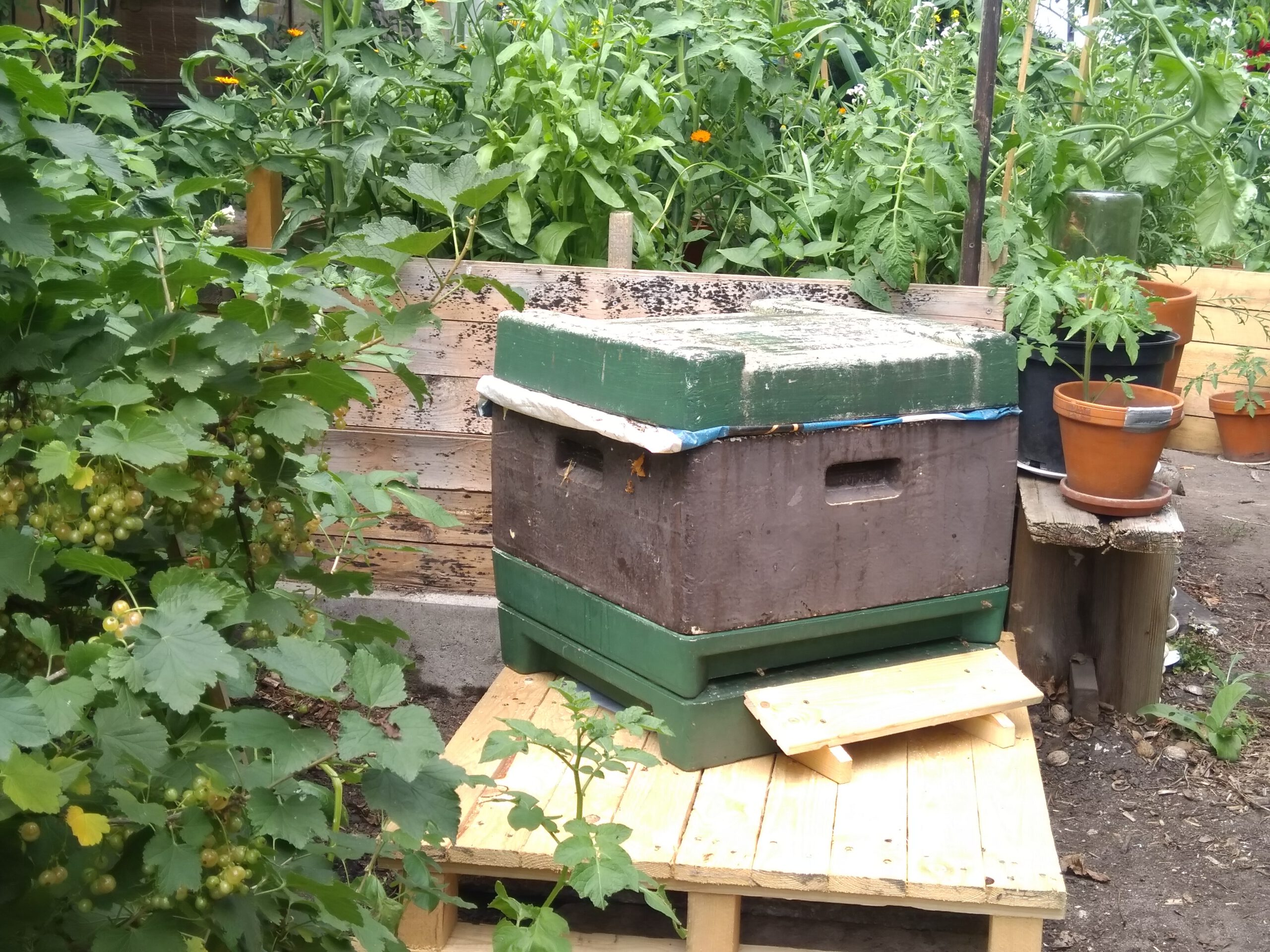 Bienenableger in der Styroporbeute